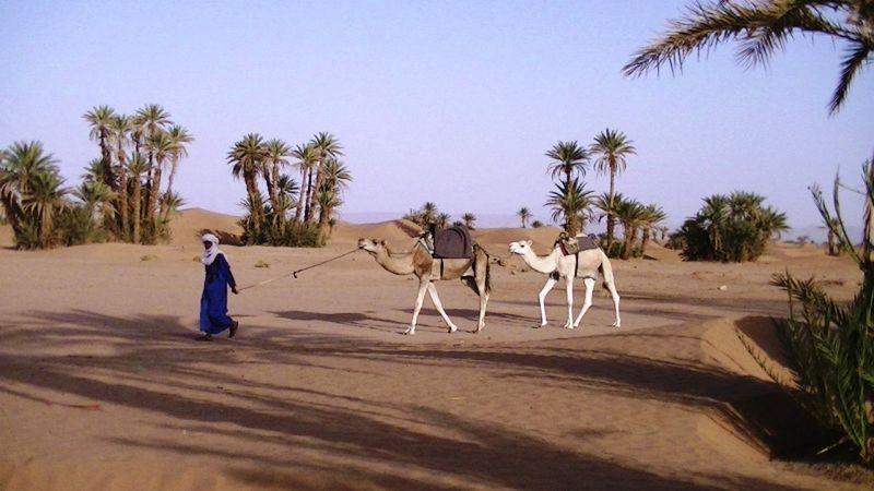 aussirose and Howie meet camels Sahara Desert - Morocco