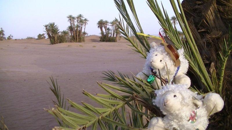 AussieBarney and AmericanBarney in the Sahara Desert - Morocco