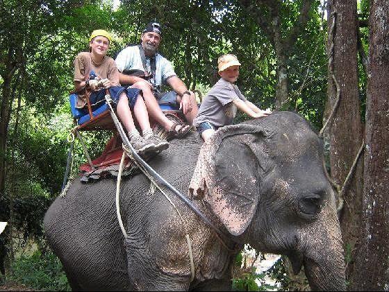 Koh Samui elephants