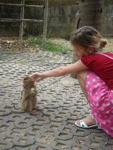 Koh Samui monkey