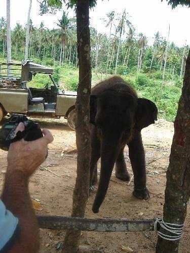 Elephant Trekk Koh Samui