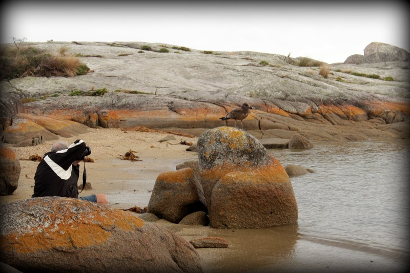 Bay of Fires 24