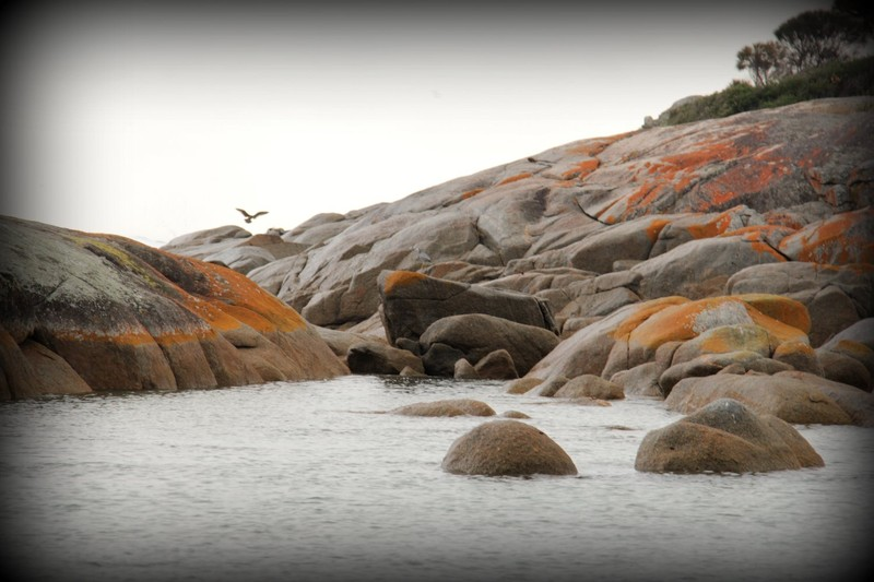 Bay of Fires 18