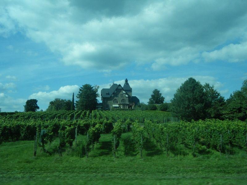 Vinyards along the Rhine River by aussirose - Oestrich-Winkel