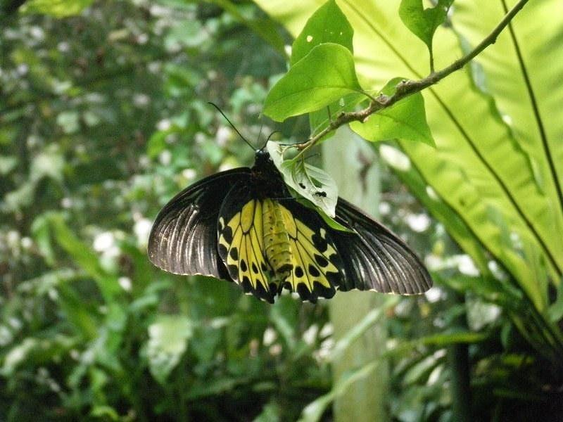 Kuala Lumpur Butterfly Park by aussirose