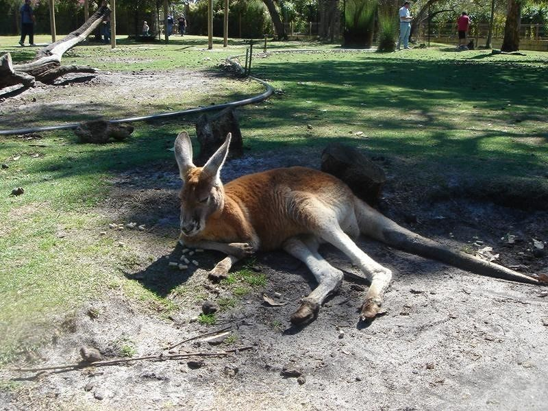 Caversham Wildlife Park Perth