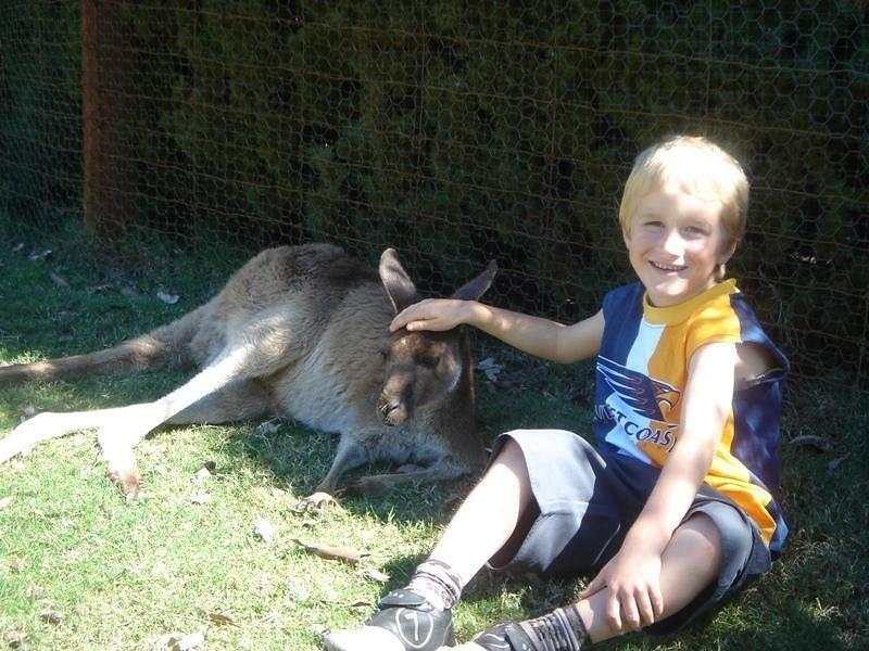 Feeding kangaroos at Caversham Wildlife Park