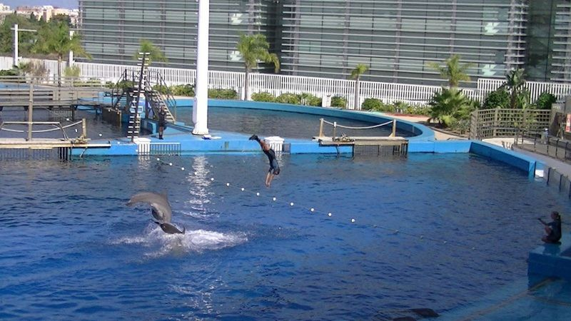Dolphin show Oceanografic Valencia by aussirose - Valencia
