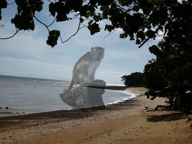 Ghost monkey Pulau Langkawi by aussirose