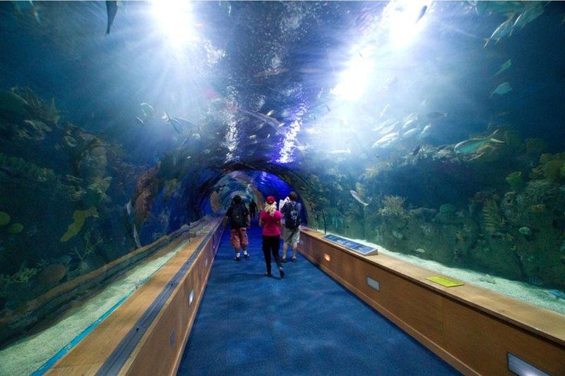 aussirose walking underwater Oceanografic Valencia - Valencia