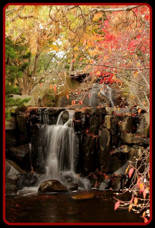 Hobart - Botanical  37