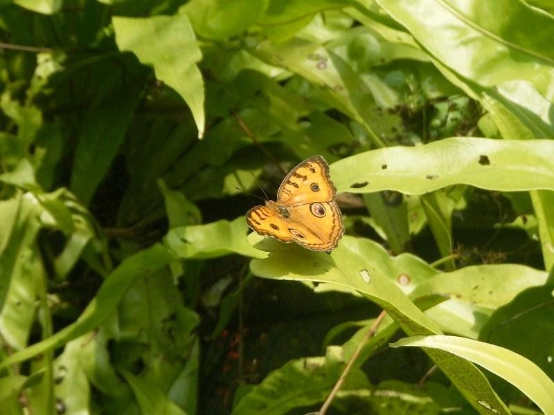 Kuala Lumpur Butterfly Park by aussirose - Kuala Lumpur