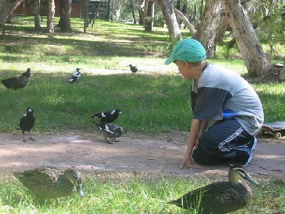 Whiteman Park, Swan Valley - Middle Swan