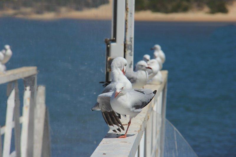 Depth of Field - Seagulls