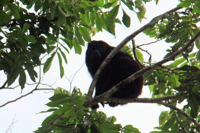 Belize - Howler Monkey Resort - River Cruise