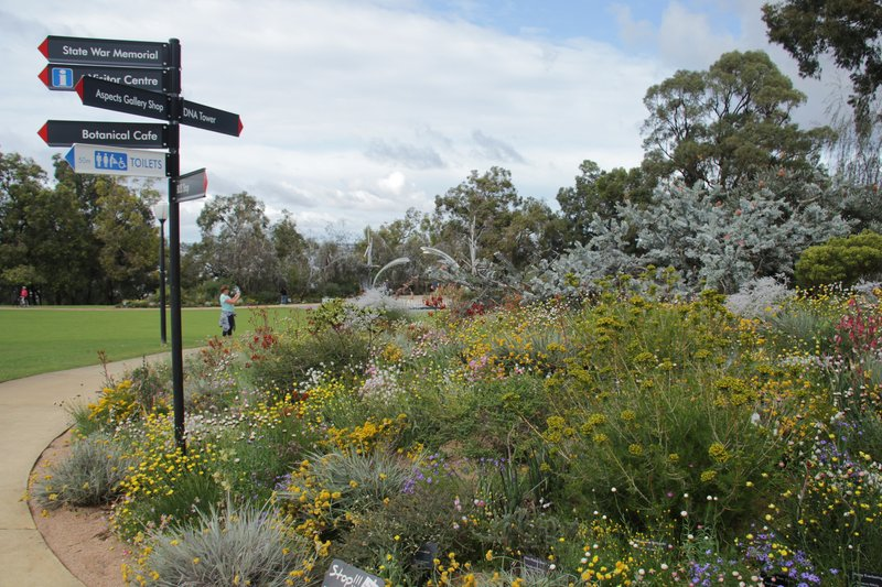 aussirose kings_park perth perth_things_to_do wa travellerspoint blog