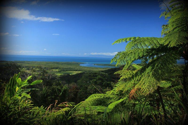 Landscape - Daintree Lookout