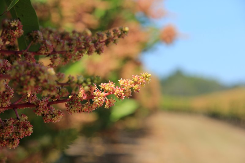 Tip - Mareeba Mango Winery 4