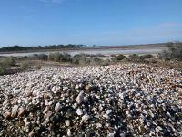 aussirose checks out quartz - Yellowdine Lake WA - Yellowdine