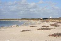 Stromatolites Cervantes - Cervantes