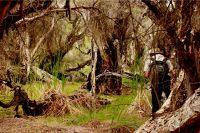 Swamp photo - Boshack Toodyay WA by aussirose - Toodyay