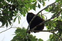 Belize - Howler Monkey Resort - River Cruise