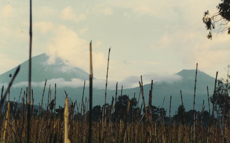 491 Virunga Mountains, Zaire