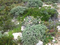Brushwood on Nisos Donousa