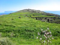 Flora on Donoussa Island
