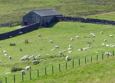 425073037464332-Countryside_..ousesteads.jpg