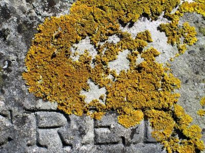 4800434-Lichen_on_tombstone_East_Sussex.jpg