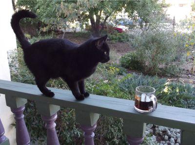 5889906-Midnight_the_cat_Silver_City.jpg