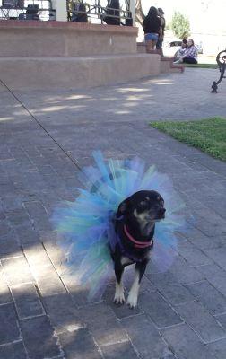 5903837-Dog_in_the_Plaza_Socorro.jpg