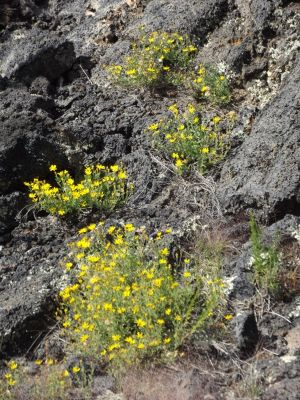 5911392-Lava_with_wildflowers_Grants.jpg