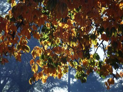 5979815-Autumn_colour_Cathedral_Park_Santa_Fe.jpg