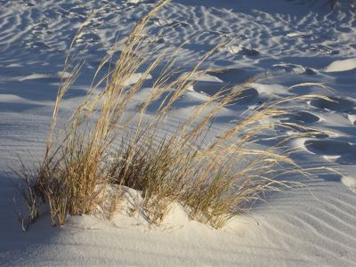 6063284-_White_Sands_National_Monument.jpg