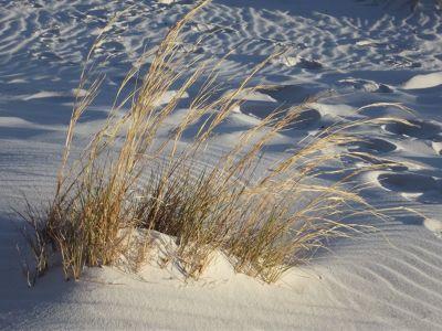 6063284-_White_Sands_National_Monument.jpg