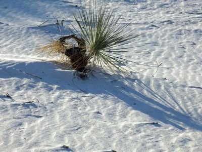 6063289-_White_Sands_National_Monument.jpg