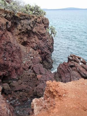 6444792-On_the_cliffs_Isla_Rabida.jpg