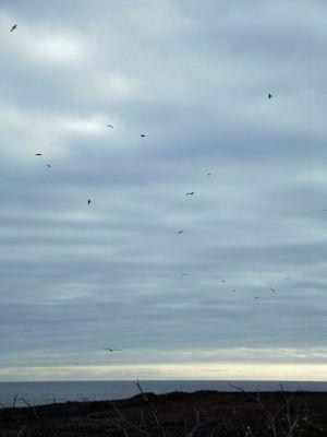 6454356-Birds_overhead_Isla_Genovesa.jpg