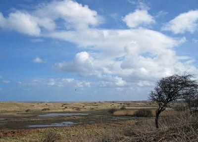 6626181-Dune_landscape_Warkworth.jpg