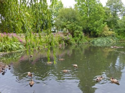 6808933-The_Duck_Pond_Ruislip.jpg