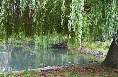 6808936-The_Duck_Pond_Ruislip.jpg