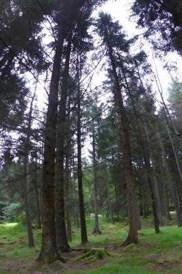 6815030-Kielder_Forest_Falstone.jpg