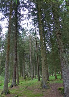 6815802-Kielder_Forest_Northumberland.jpg