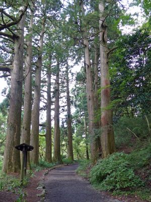 6892882-Path_through_the_cedars_Hakone.jpg