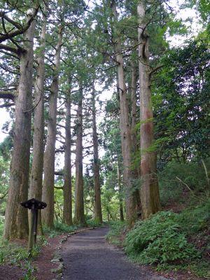 6892882-Path_through_the_cedars_Hakone.jpg