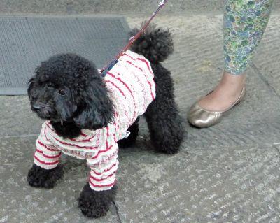 6927603-Japans_best_dressed_dogs_Takayama.jpg
