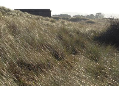 7287026-Wartime_defences_Druridge_Bay.jpg