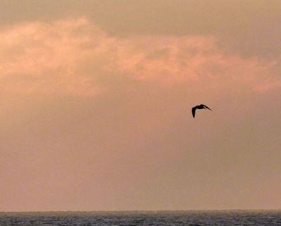 7307082-Spitbank_sunrise_Portsmouth.jpg